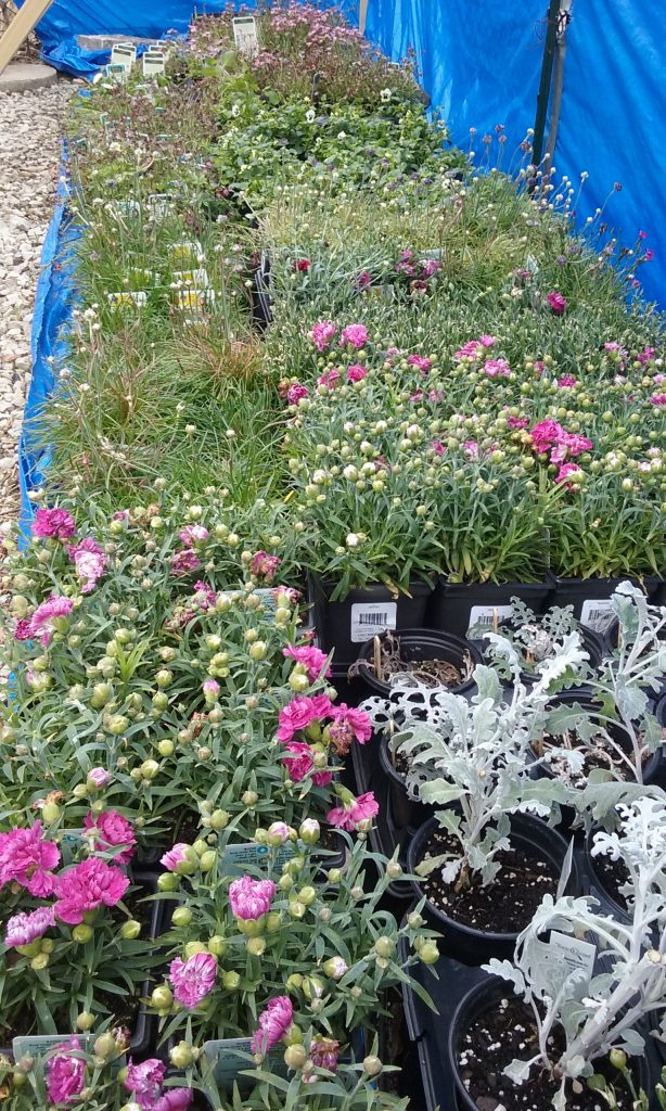 Resources 2017 Spring Distribution - Plants from NavyPier
