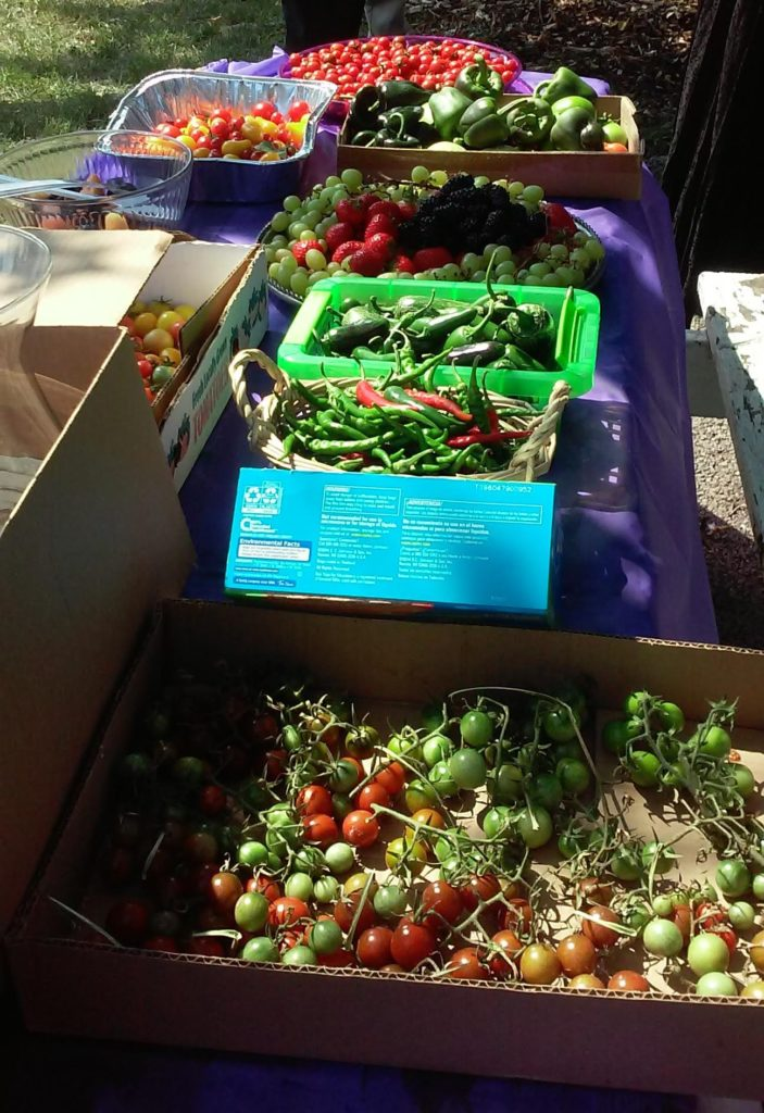 Vegetables on display at New Horizons Community Garden