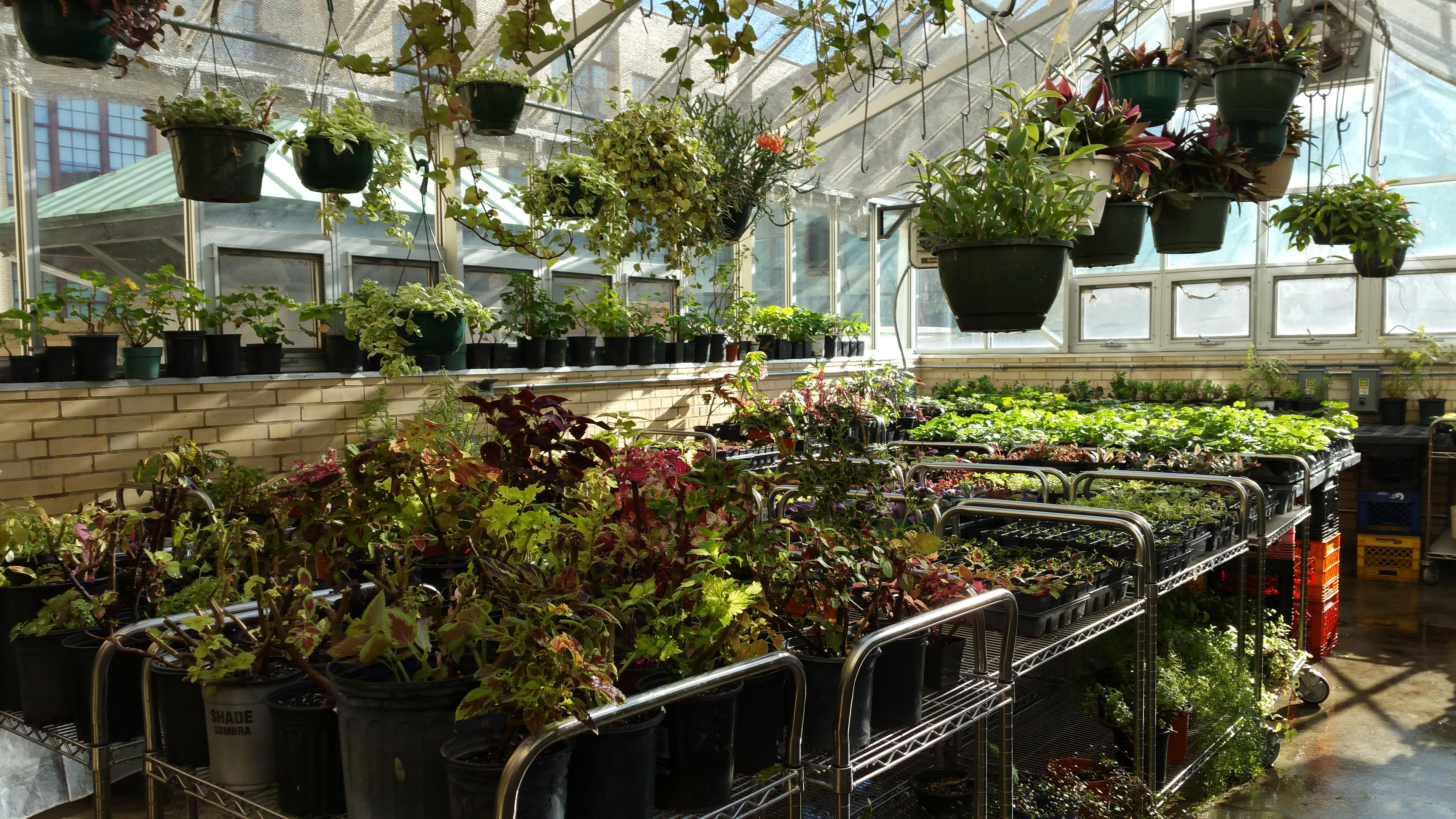 CCGA Greenhouses in Operation Now | Chicago Community Gardeners ...
