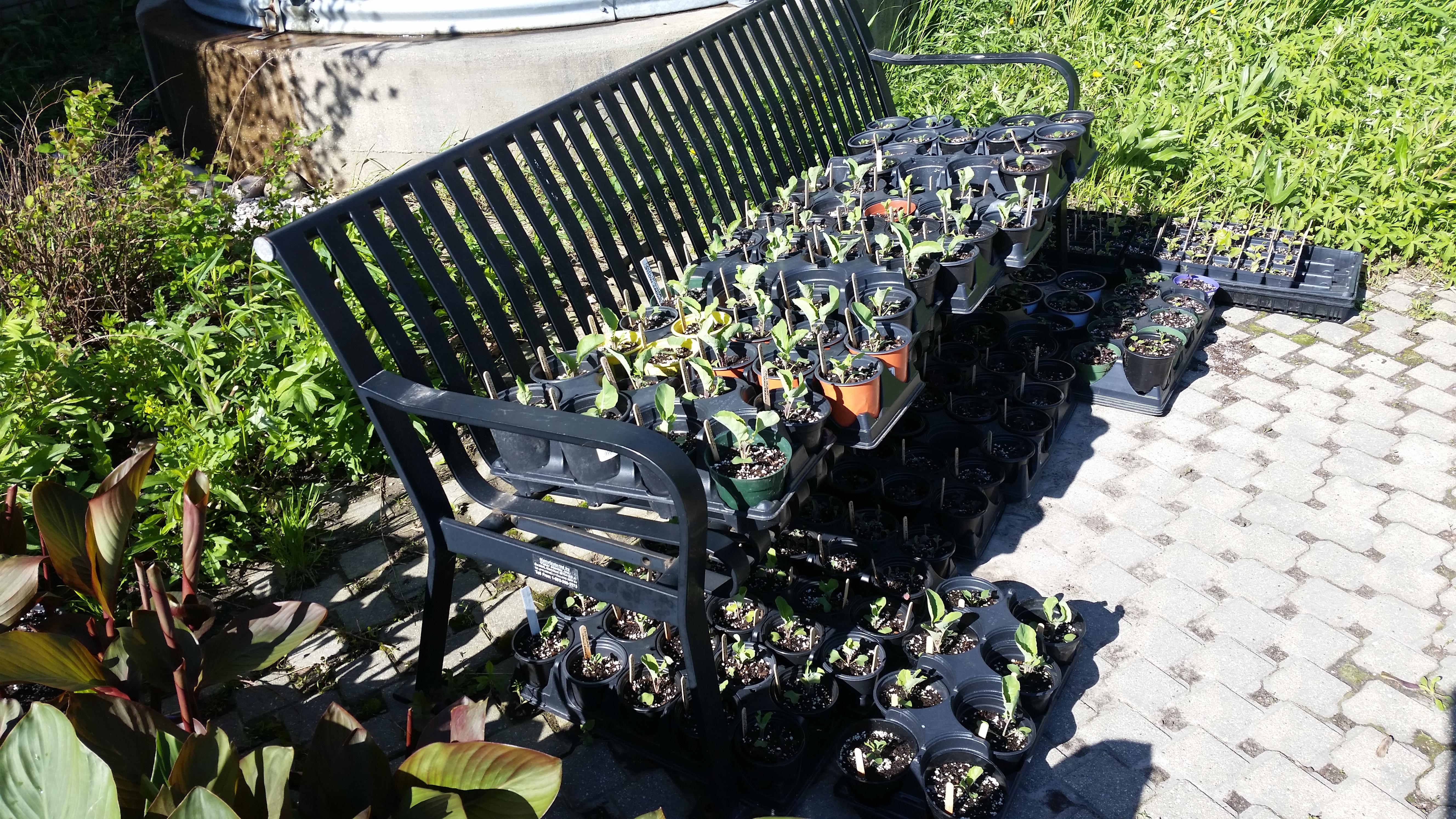May 6th Distribution kale and eggplant