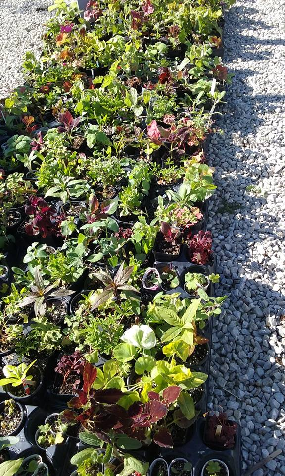 May 6th Distribution plants waiting for new homes