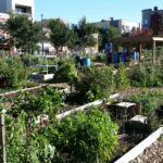 Monarch Comm Garden - Overview