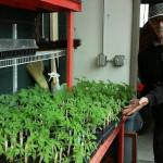 Phillip Englert with tomato seedlings for the Vegetable Seedling Distribution